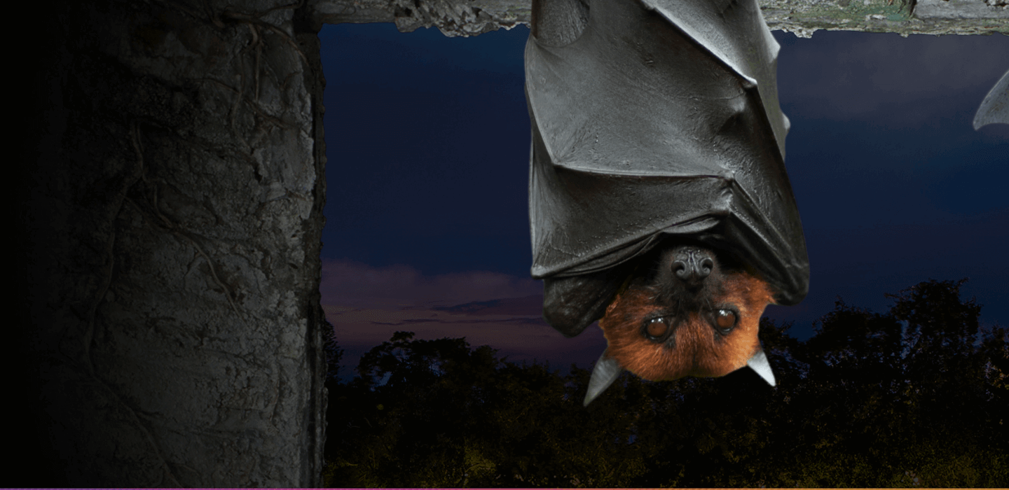 Flir Ists Bat Research And Conservation